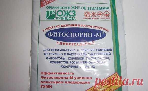 Фитоспорин-М: как и зачем? | садоёж | Яндекс Дзен