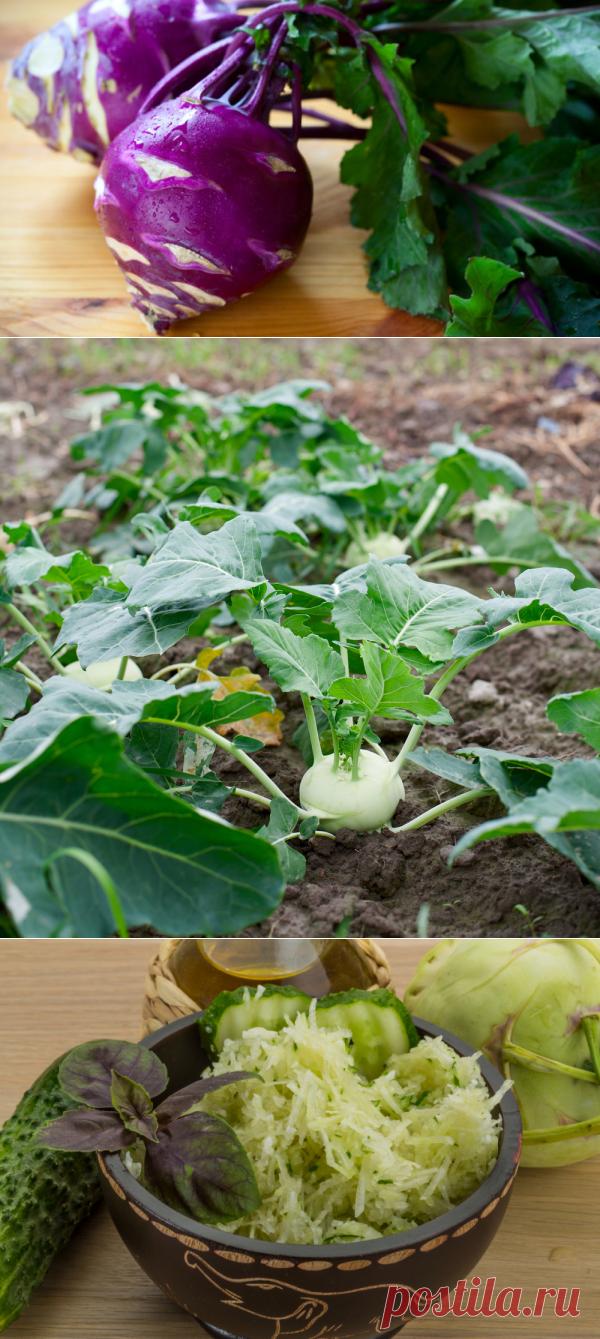 Надоела редиска? Посадите кольраби | Растения