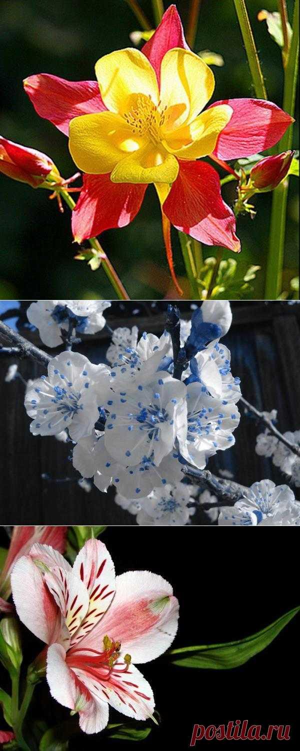 Подборка редких цветов