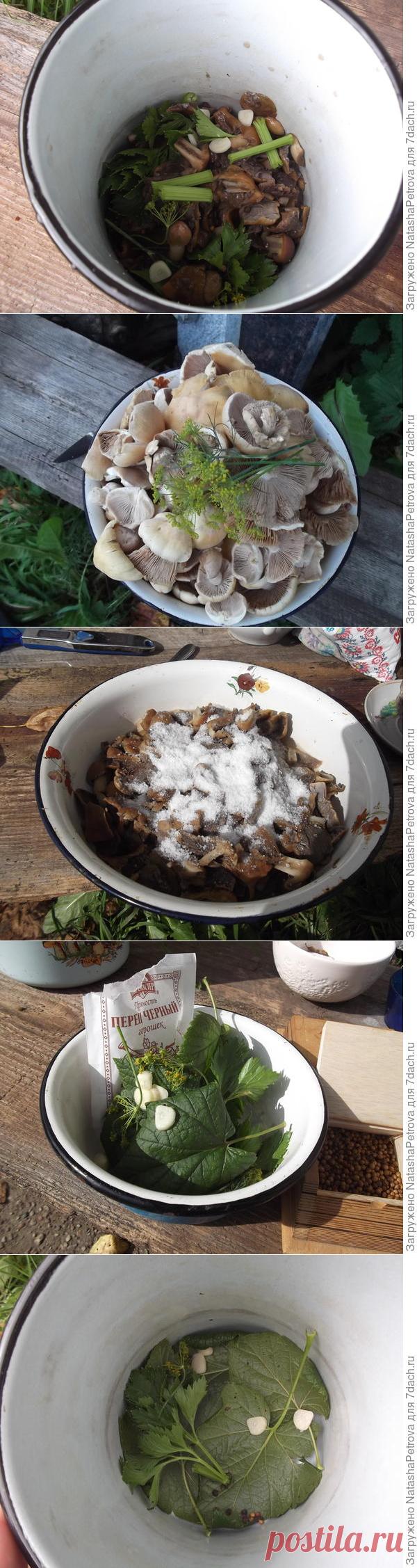 Квашеные грибы. Польза квашения. Рецепт с фото