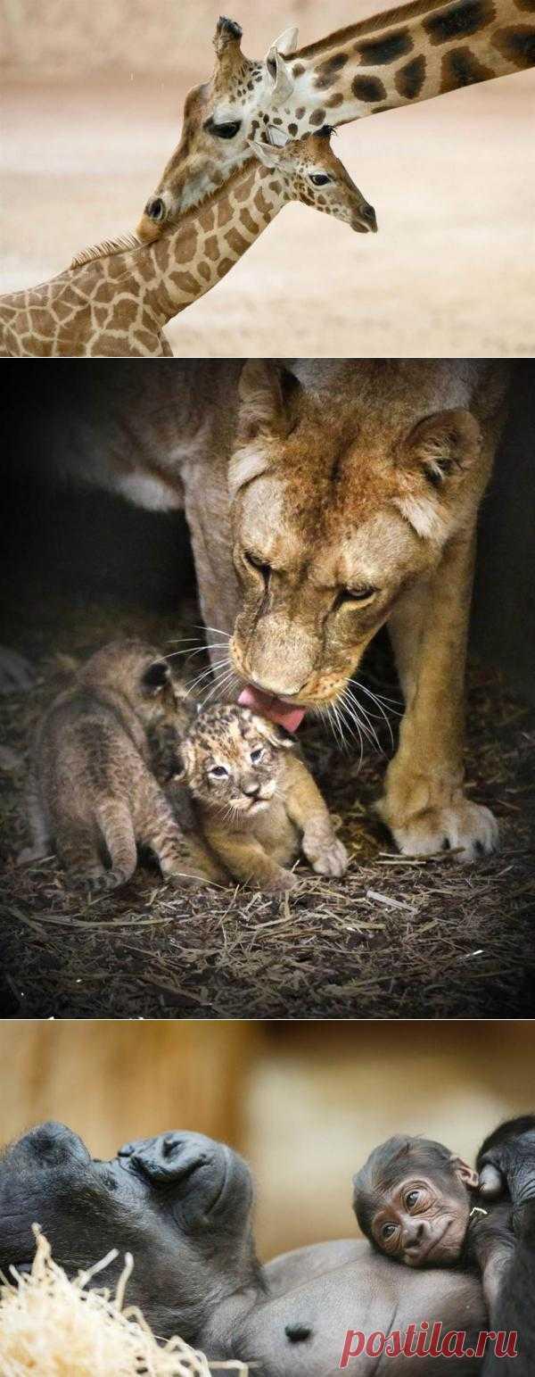 Животные и их детёныши : НОВОСТИ В ФОТОГРАФИЯХ