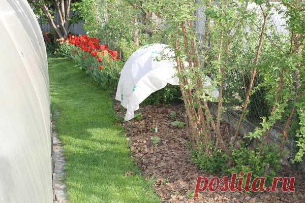 Для чего весной пригодятся осенние листья? С листьями все растет и цветет лучше, если правильно применять | Есть время под солнцем | Яндекс Дзен