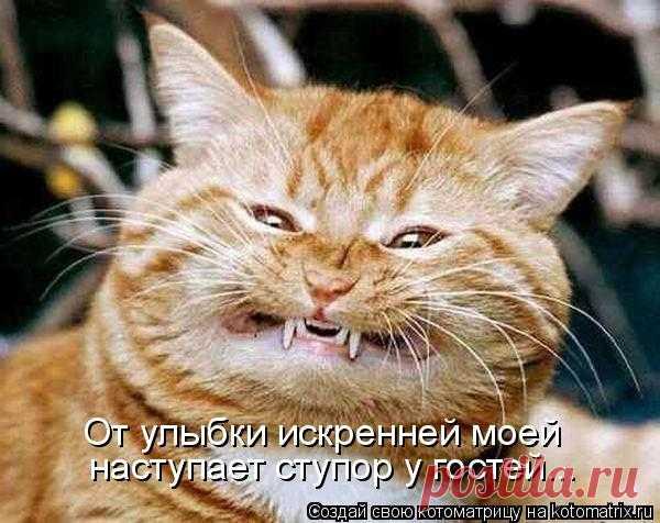 Котоматрица: Случайные котоматрицы