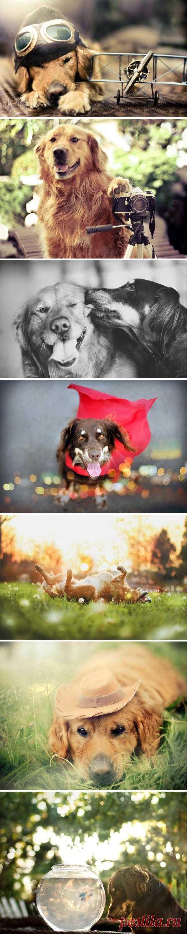 Удивительные портреты собак от Джессики Тринх. Джессика - начинающий фотограф, она молода и подает большие надежды. С тех пор, как в моих руках оказался фотоаппарат, я поняла, что открыла для себя новое измерение, — говорит Джессика. – измерение, в котором можно расширить свое воображение и бежать бесконечно.