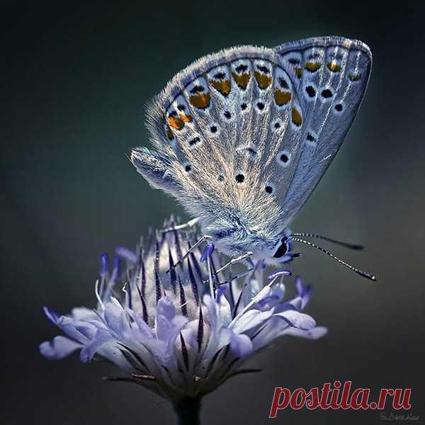 Избранное - 101 фото. Фотографии Людмила Дьяченко.