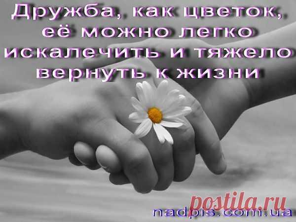 Как научить школьника ладить с окружающими http://psifakt.mirtesen.ru/blog/43455360262