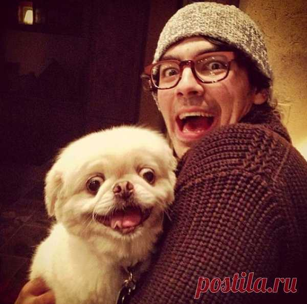 Собаки, которые просто не могут... Первоисточник http://bigpicture.ru/?p=384494