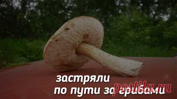 За грибами | Дневник рыбака | Яндекс Дзен