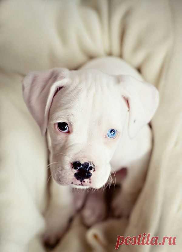 Новорожденный щеночек с разноцветными глазами