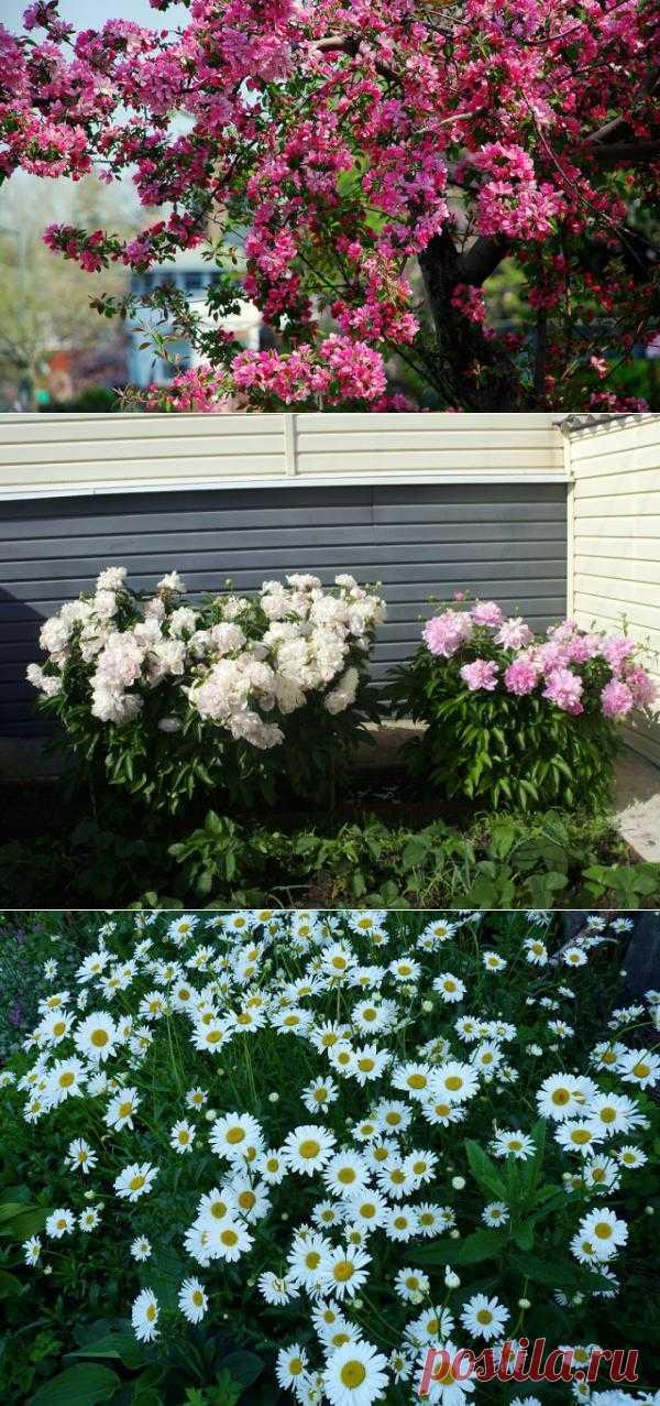 (+1) сообщ - Все кругом в цвету: и мамина лоджия и наш сад | САД НА ПОДОКОННИКЕ