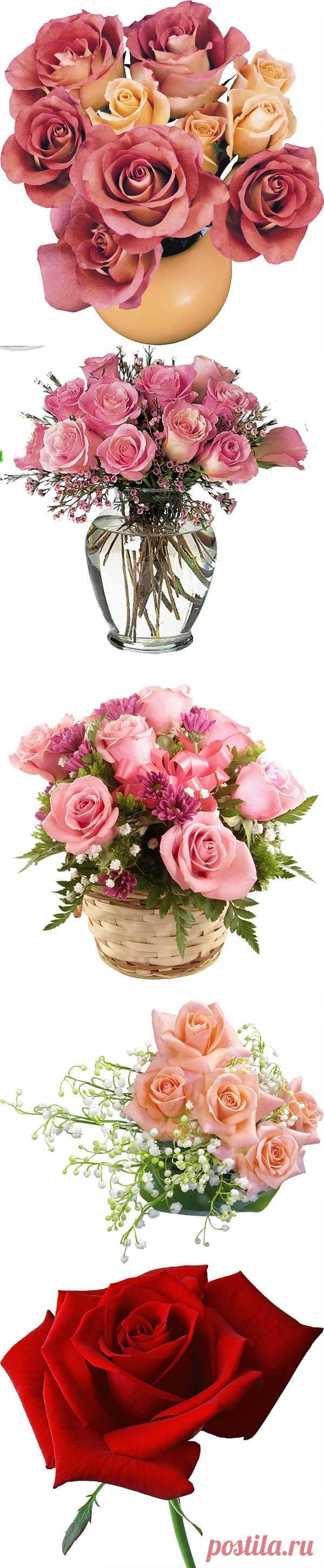 Офигенно красивые розы PNG.