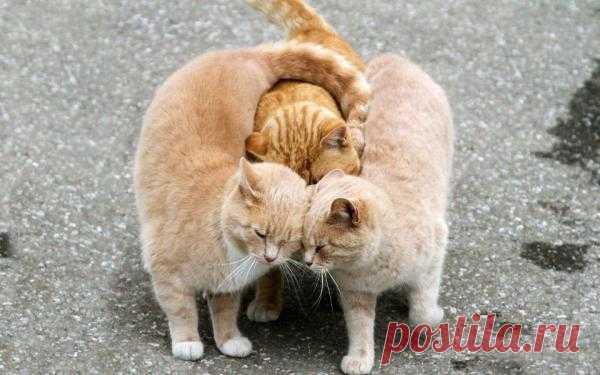 "Помните ребус про ""Три кота Ж""? Какая иллюстрация! ))"