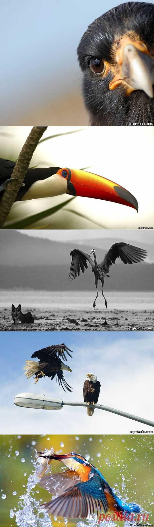 Фото красивых птиц - Фото мир природы