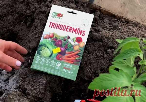 Каждый год кладу эти 5 ингредиентов в лунку при посадке томатов и всегда с богатым урожаем😊😊😊 | 🌷Ваш Цветок | Яндекс Дзен