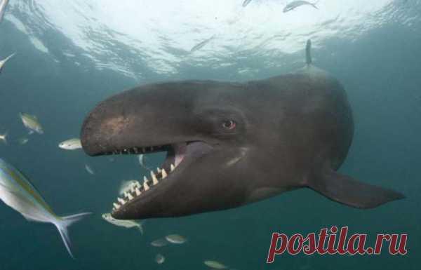 Китовая улыбка