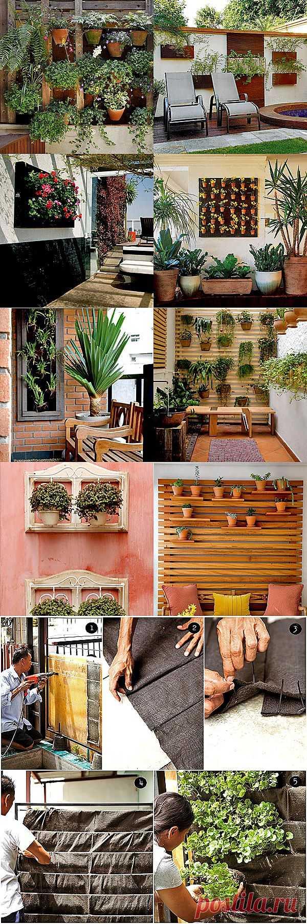 Вертикальное озеленение стен — 15 идей по декору и мастер-класс | Дачный дизайн