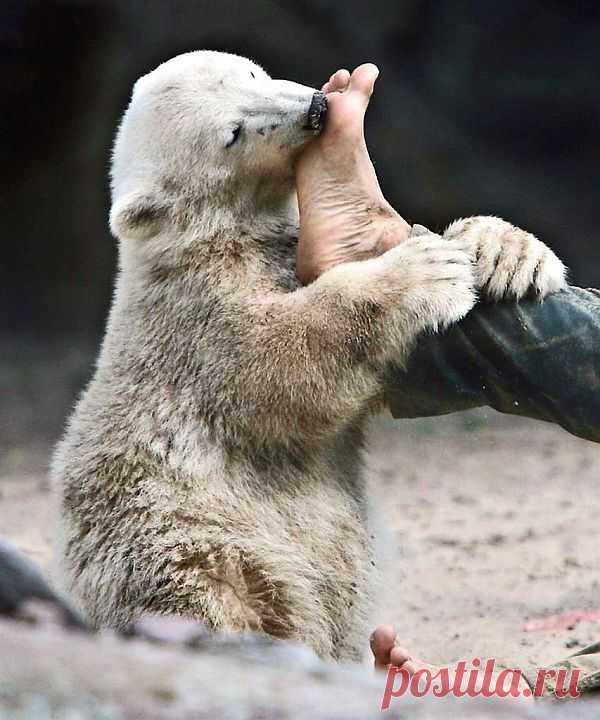 Ам-ам-ам, какие вкусные ноги!!!