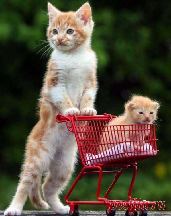 Котенок решил покатать своего младшего братика в миниатюрной тележке!