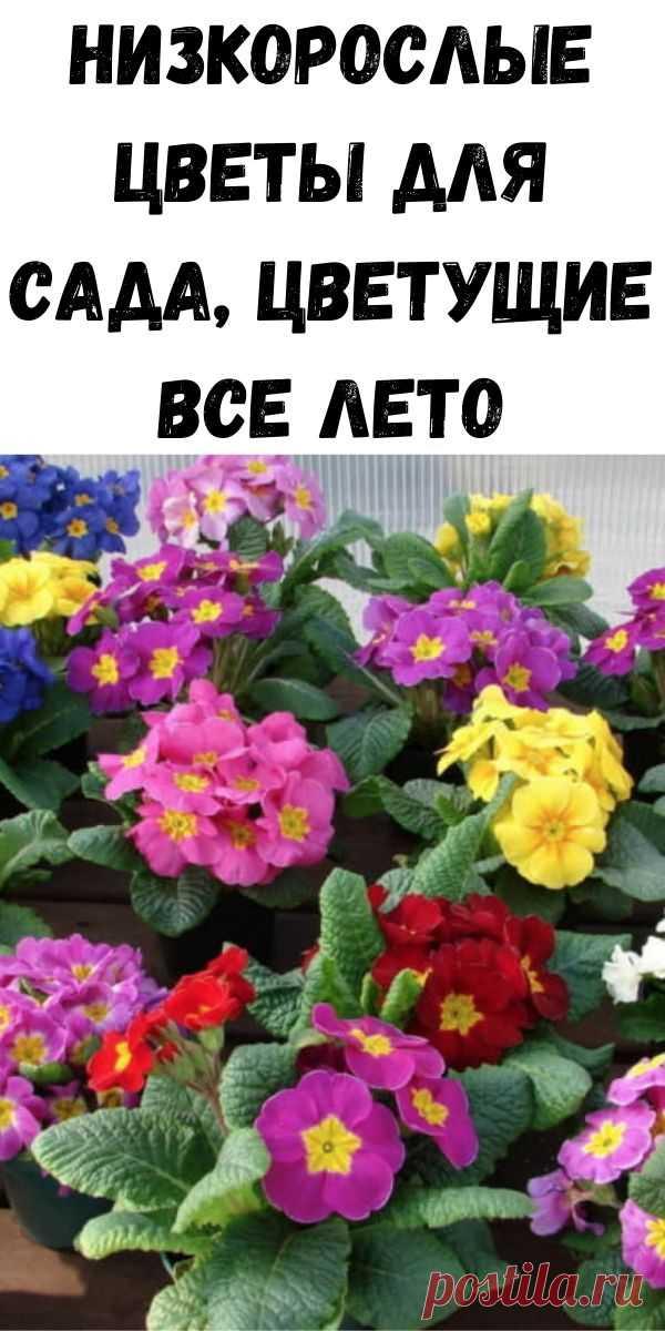 Низкорослые цветы для сада, цветущие все лето - Советы на каждый день
