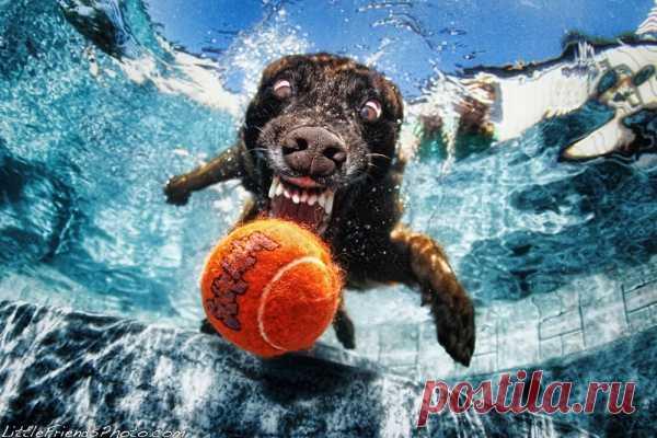 Ныряющие собаки!