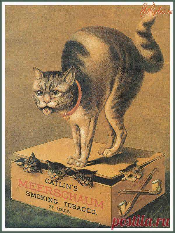 Открытки, коты на старых открытках
