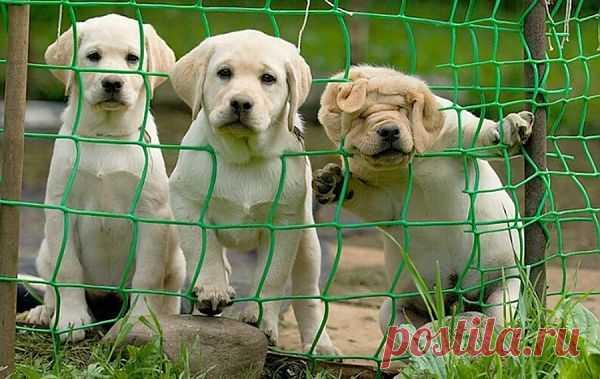 Посмотрим, посмотрим... Любопытные щенки