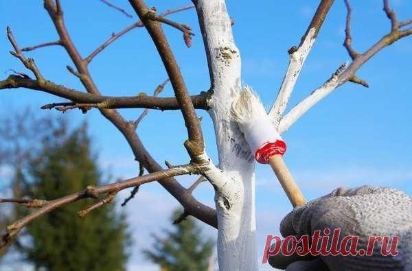 Календарь работ по защите яблони и груши..