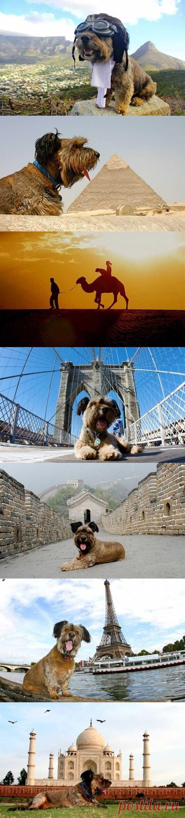 Невероятная история собаки из приюта, которой посчастливилось найти хозяйку и объехать весь свет в поддержку идеи помощи бездомным животным