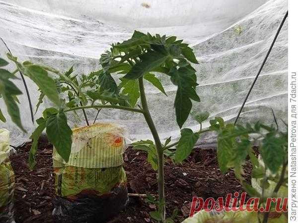 Выращивание рассады в упаковках для хлеба, улитках и пеленках. Плюсы и минусы, сравнение. Фото
