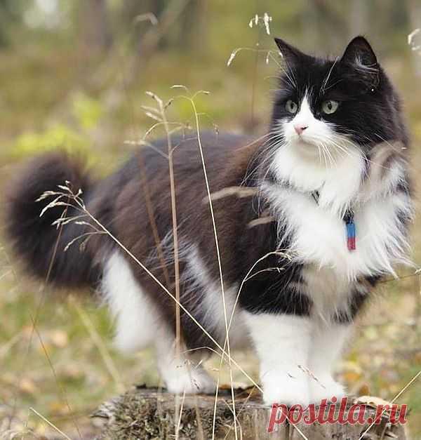 kitty cat with attitude