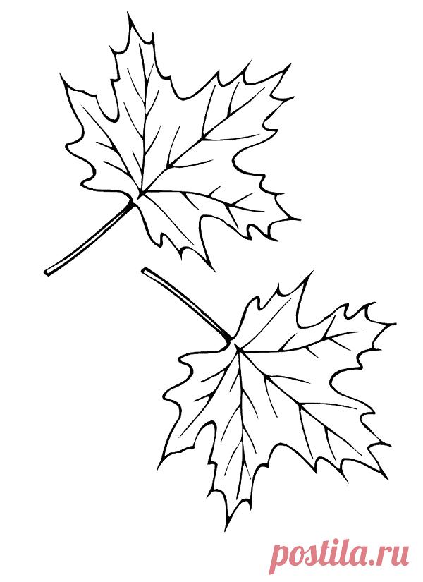 листья картинки рисунки
