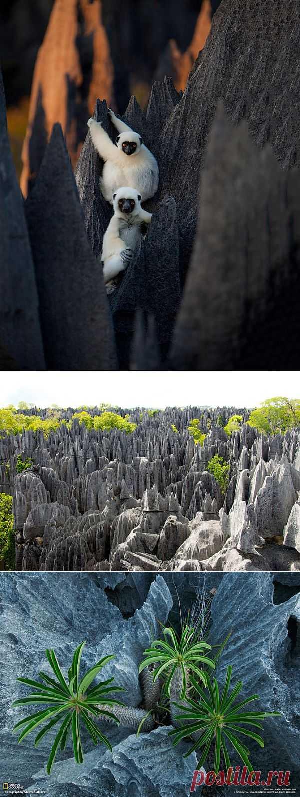 «Каменный лес» на Мадагаскаре | Fresher - Лучшее из Рунета за день