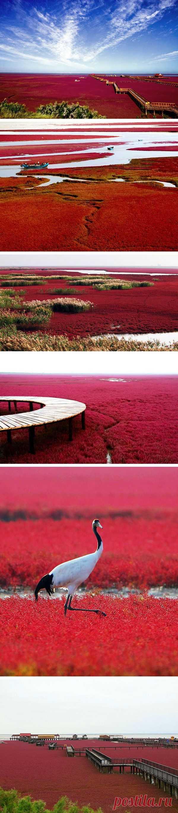 Удивительный красный пляж Паньцзинь в Китае
