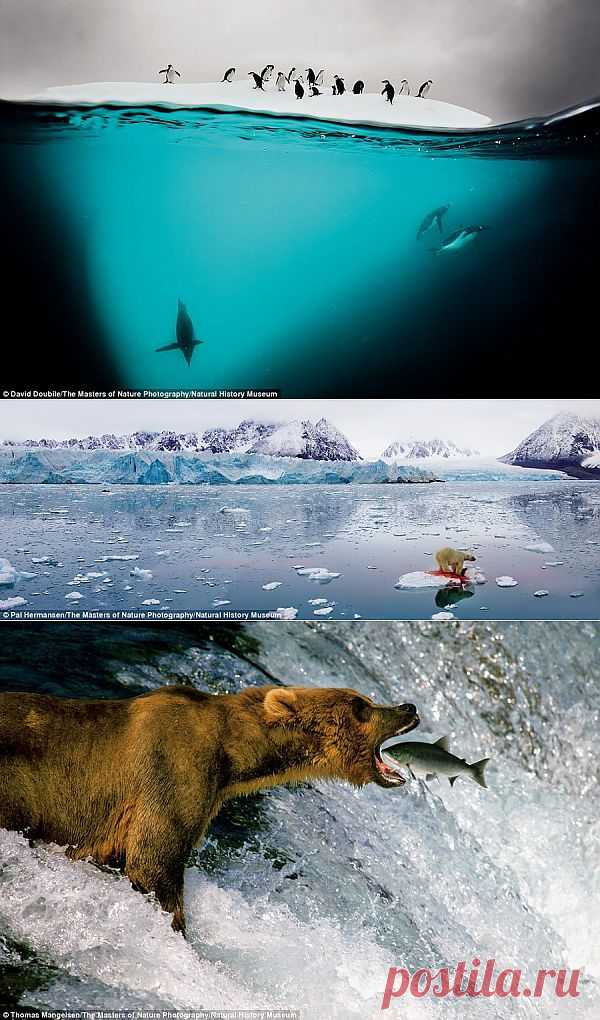 Потрясающие моменты вдикой природе. Фоторепортаж