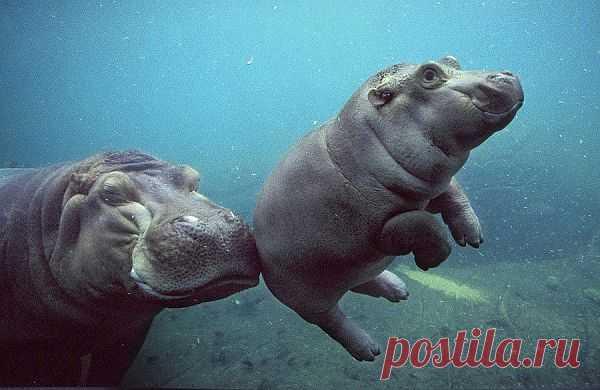 Пора учиться плавать
