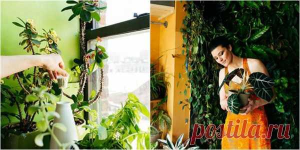 Бурное цветение и пышная листва обеспечены, если полить растения этой простой подкормкой!   Naget.Ru