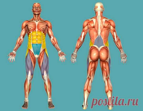Как восстановить тело за 2 недели: гимнастика профессора Такеи Хитоши - Жизнь планеты