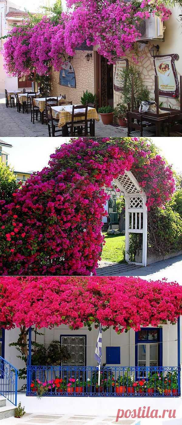 (+1) - Цветущие балконы: красота! | Хвастуны и хвастушки