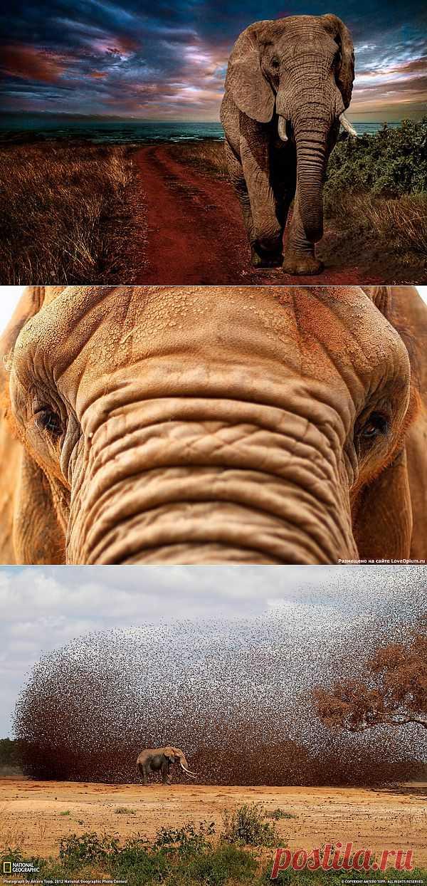 Уникальные животные: слоны во всем великолепии
