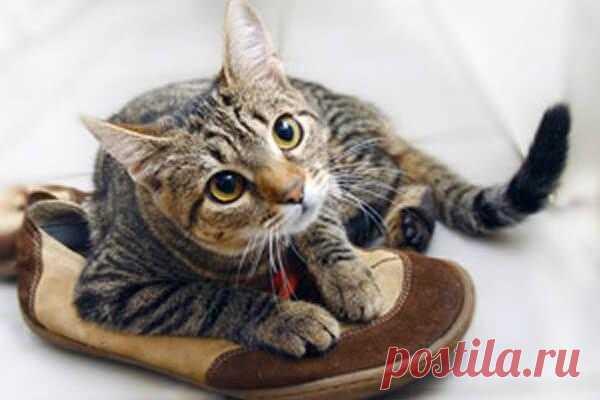 кошачья моча диван