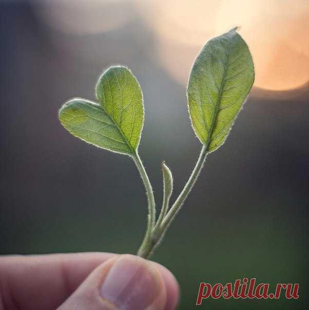 Помни: Господь даёт по сердцу. Каковое сердце - таков и дар.   Святый праведный Иоанн Кронштадтский.