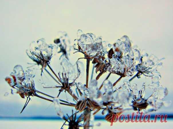 💎Зимние сухоцветы в бриллиантах 💎