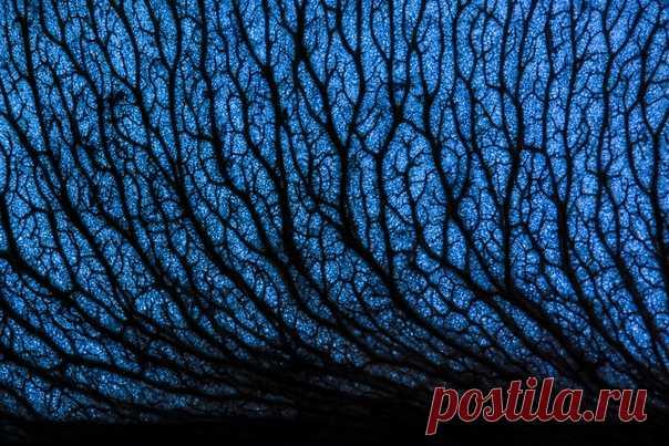 Фантастический снимок сделал Dar_Veter (nat-geo.ru/photo/user/21489/), сфотографировав крылатку клёна на просвет. Звёздной ночи!