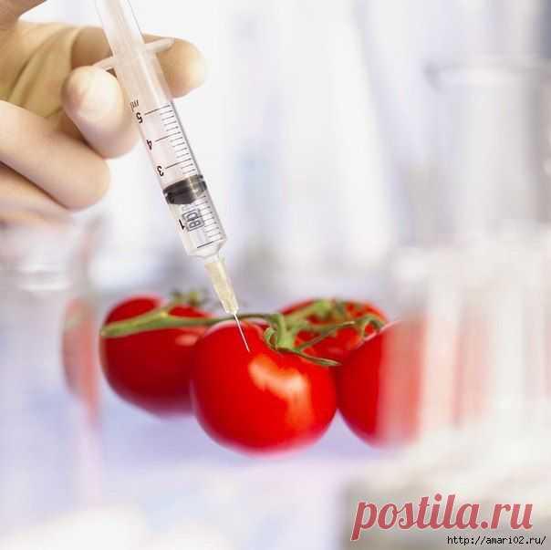 Что мы едим? О ПРОДУКТАХ ГМО..