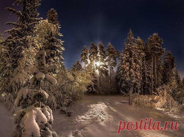 Ленинградская область. Автор фото: Фёдор Лашков. Добрых снов.