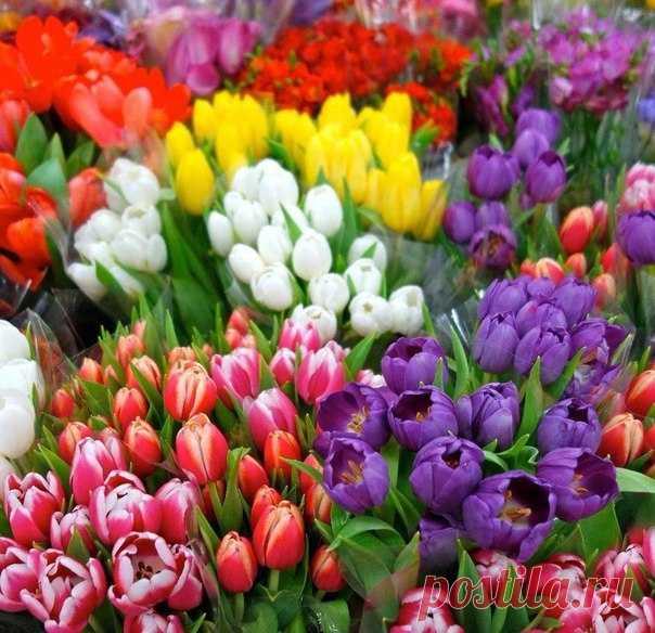 Любимые тюльпаны...