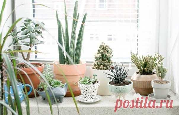 6 полезных растений для вашего дома Домашние растения не только украшают подоконник, но и поддерживают микроклимат, насыщают воздух кислородом и даже помогают справиться со стрессом. Рассказываем про самые полезные из них.