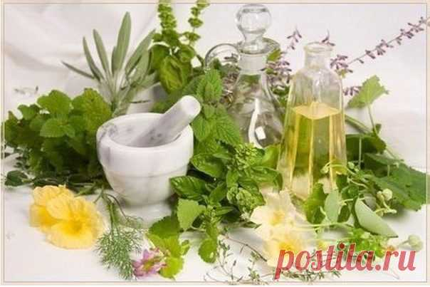 50 растений, очищающих организм от паразитов - Образованная Сова