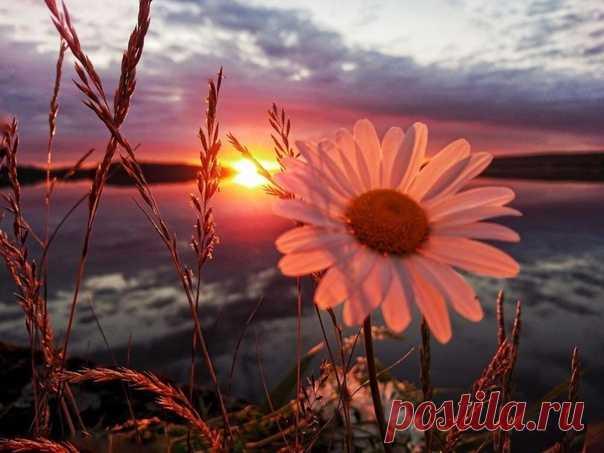 Промчался день... И завтра будет то же: Восход, закат, и небо, и трава... Ты знаешь, мир невероятно сложен, И вместе с тем он прост, как дважды-два.  «Мы строим мир!» - Воскликнешь ты с азартом, Но даст природа главное понять: Что всё равно (без нас ли, с нами?) завтра Начнётся день. И снова. И опять.  Восход, закат... Как просто мир устроен! В нём день за днём идёт, за часом - час. Нет, то не мы его усердно строим, - То он легко и просто строит нас.