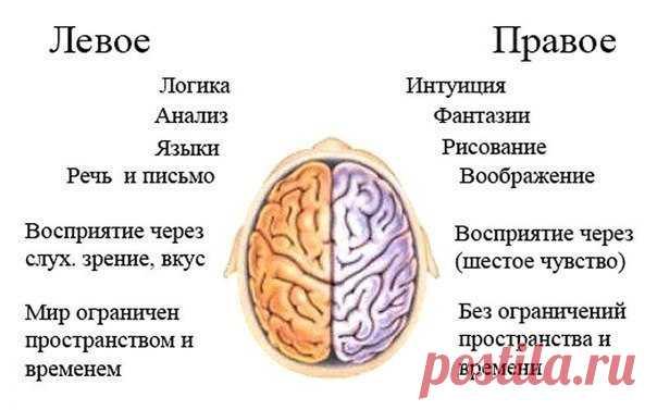 Тренировать нужно не только тело. Упражнение ума для развития мозга ... 316b1855336